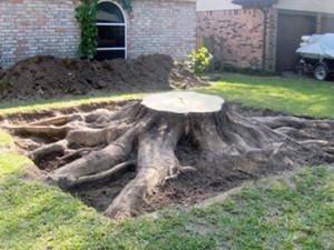 Stump Removals Johannesburg