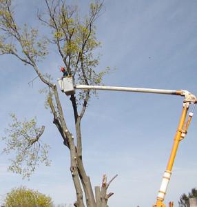 Tree Cutting Johannesburg